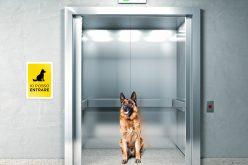 Animali in condominio: ecco le regole da seguire