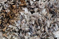 Versalis (Eni), pronto al via un impianto per le biomasse